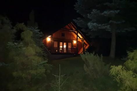 noc-z-drzewamiorig